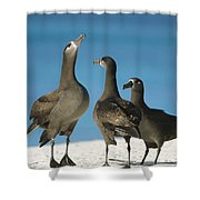 Black-footed Albatross Gamming Group Shower Curtain
