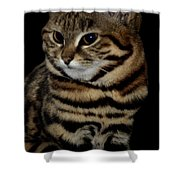 Black-footed Cat Shower Curtain