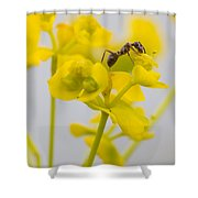 Black Garden Ant On Yellow Flower Shower Curtain