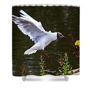 Black Head Gull - Preparing For Landing Shower Curtain