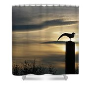 Black Headed Gull   Larus Ridibundus Shower Curtain