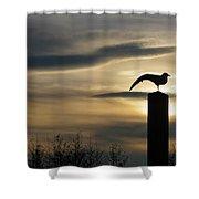 Black Headed Gull   Larus Ridibundus Shower Curtain