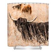 Black Highland Cow Shower Curtain