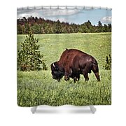 Black Hills Bull Bison Shower Curtain by Robert Frederick