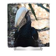 Black Hornbill Shower Curtain