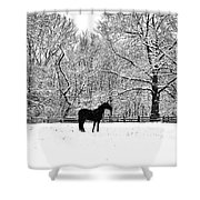 Black Horse In The Snow Shower Curtain