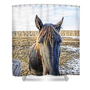 Black Horse Shower Curtain