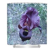Black Iris Shower Curtain