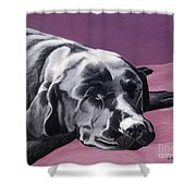 Black Labrador Beauty Sleep Shower Curtain