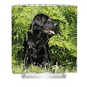 Black Labrador Dog Shower Curtain