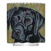 Black Labrador Shower Curtain