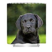 Black Labrador Puppy Shower Curtain