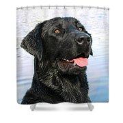 Black Labrador Retriever Dog Smile Shower Curtain