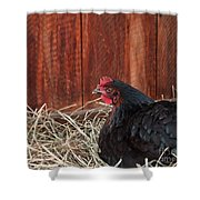 Black Laying Hen On Nest Art Prints Shower Curtain