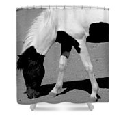 Black N White Horse Shower Curtain