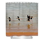 Black-necked Stilt - Lake Powell Shower Curtain
