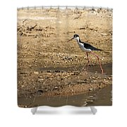 Black-necked Stilt Shower Curtain by Robert Bales