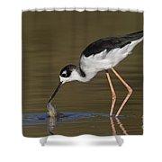 Black Necked Stilt With Fish Shower Curtain