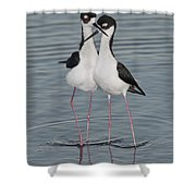 Black-necked Stilts Shower Curtain