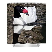 Black Necked Swan Shower Curtain