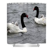 Black Necked Swans Patagonia 1 Shower Curtain