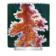 Black Oak Leaf Rime Ice Yosemite National Park California Shower Curtain