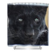 Black Panther Waiting Shower Curtain by John Telfer