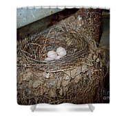 Black Phoebe Nest With Eggs Shower Curtain