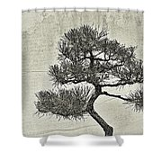 Black Pine Bonsai In Monochrome Shower Curtain
