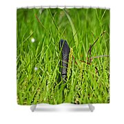 Black Racer Back Shower Curtain by Al Powell Photography USA