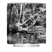 Black Reflected Shower Curtain