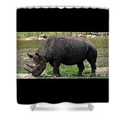 Black Rhino-19 Shower Curtain