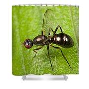 Black Scavenger Fly Shower Curtain