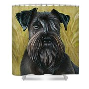 Black Schanuzer Shower Curtain