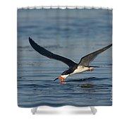 Black Skimmer Rynchops Niger Skimming Shower Curtain