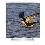 Black Skimmers Shower Curtain