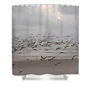 Black Skimmers On The Beach At Dawn Shower Curtain