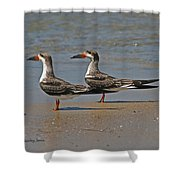 Black Skimmers On The Beach Shower Curtain