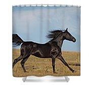 Black Stallion Shower Curtain