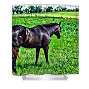 Black Stallion In Pasture Shower Curtain