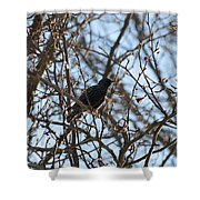 Black  Starling Shower Curtain