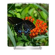 Black Swallow Tail On Beautiful Orange Wildlflower Shower Curtain