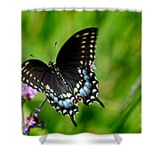Black Swallowtail Butterfly In Garden Shower Curtain