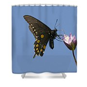 Pipevine Swallowtail Butterfly Shower Curtain