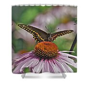 Black Swallowtail On Cone Flower Shower Curtain
