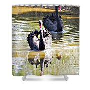 Black Swan 1 Shower Curtain