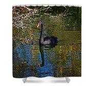 Black Swan 4 Shower Curtain