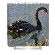 Black Swan At Sunset Shower Curtain