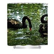 Black Swan Ballet Shower Curtain