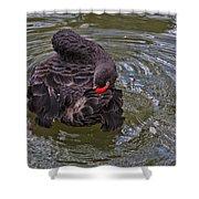 Black Swan Gladys Porter Zoo Texas Shower Curtain